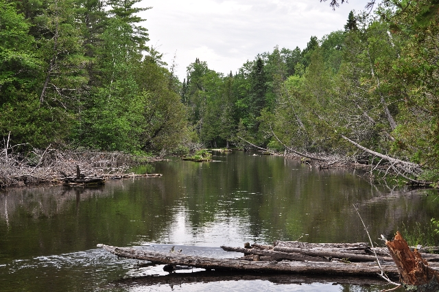 AuSable River.JPG